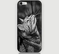 Недорогие -посмотреть на рисунок кошки случае задняя крышка для phone6 плюс случае