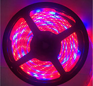 cheap -5M 5Red1Blue 300LED SMD5050 IP65 Hydroponic Systems Led Plant Grow Light Waterproof Led Grow Strip Light(DC12V)