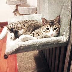 お買い得  猫ケア用品、グルーミング-ネコ ベッド ペット用 マット/パッド ソリッド 保温 洗濯可 カジュアル/普段着 グレー イエロー ペット用