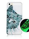 padrão cartoon gato fluorescência após caso de volta duro sunniness para iPhone 4 / 4S
